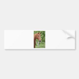 Cabeza del caballo marrón pegatina de parachoque