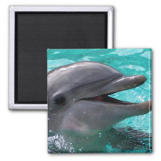 Cabeza del delfín en agua del aquamarine imán cuadrado