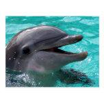 Cabeza del delfín en agua del aquamarine postal