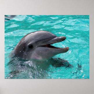 Cabeza del delfín en agua del aquamarine póster