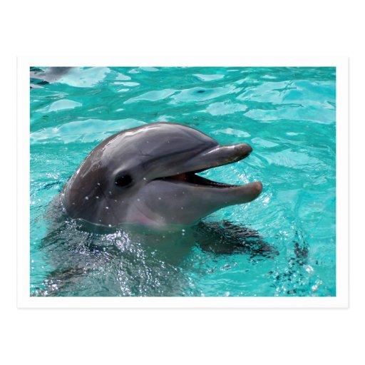 Cabeza del delfín en agua del aquamarine tarjeta postal