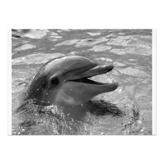 Cabeza del delfín en blanco y negro abierto de la  comunicado