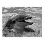 Cabeza del delfín en blanco y negro abierto de la  postal