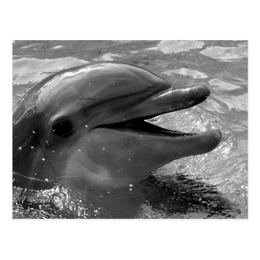 Cabeza del delfín en blanco y negro abierto de la tarjeta postal