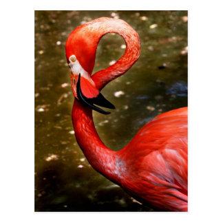 Cabeza del flamenco curvada abajo tarjetas postales