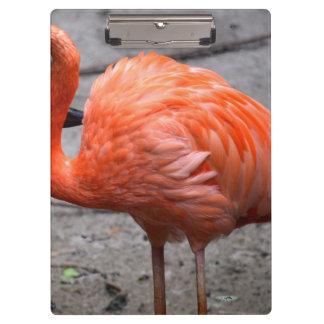 cabeza del flamenco curvada contra pájaro de la ar