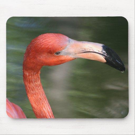 Cabeza del flamenco del Rosado-Naranja Tapetes De Ratones