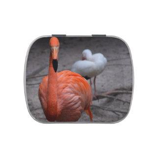 cabeza del flamenco en fondo del pájaro del lado i frascos de caramelos
