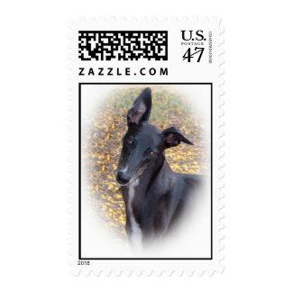 Cabeza del galgo timbre postal