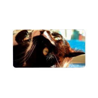 cabeza del gato en imagen felina animal aseada de etiquetas de dirección