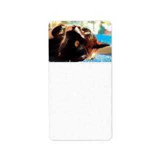 cabeza del gato en imagen felina animal aseada de etiqueta de dirección