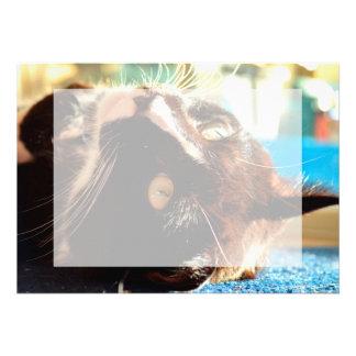 cabeza del gato en imagen felina animal aseada de comunicados personalizados