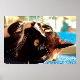 cabeza del gato en imagen felina animal aseada de poster
