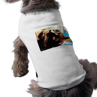 cabeza del gato en imagen felina animal aseada de ropa para mascota
