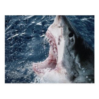 Cabeza del gran tiburón blanco postales