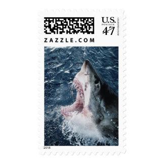 Cabeza del gran tiburón blanco timbre postal