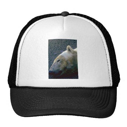 Cabeza del oso polar, dormida gorros
