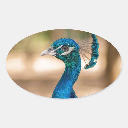 Cabeza del pavo real calcomanías de ovaladas