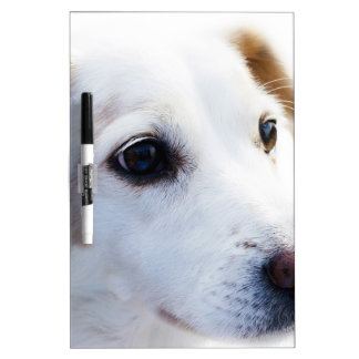 Cabeza del perro pizarra