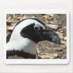 cabeza del pingüino alfombrilla de ratón