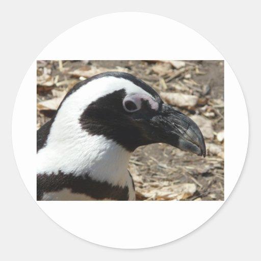 cabeza del pingüino pegatinas