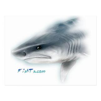 Cabeza del tiburón de tigre postales
