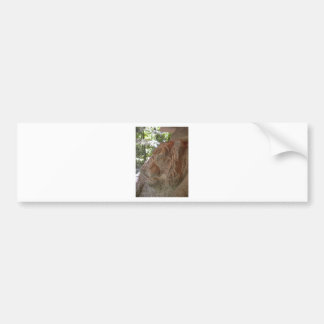 Cabeza del tigre del granito por el ciervo etiqueta de parachoque