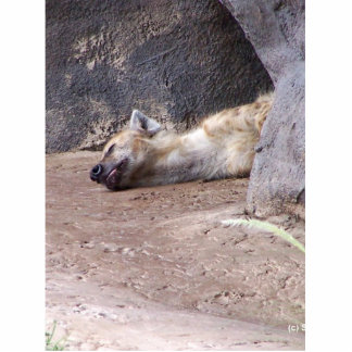 Cabeza durmiente del Hyena que miente en la imagen Escultura Fotográfica