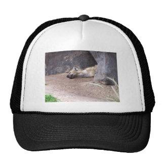 Cabeza durmiente del Hyena que miente en la imagen Gorras De Camionero