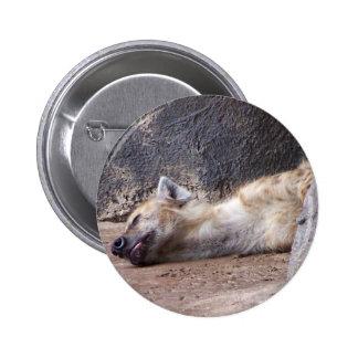 Cabeza durmiente del Hyena que miente en la imagen Pin Redondo De 2 Pulgadas