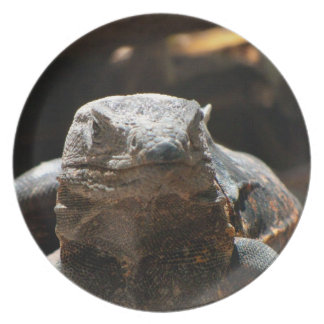 Cabeza en iguana plato de comida