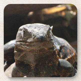 Cabeza en iguana posavaso