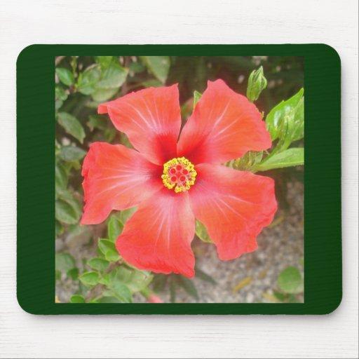 Cabeza en tiro de una flor tropical roja del hibis alfombrillas de raton
