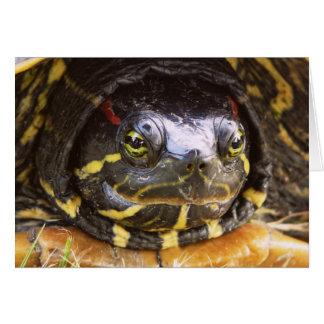 Cabeza espigada roja de la tortuga del resbalador tarjeta de felicitación