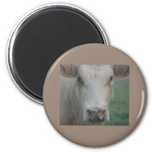 Cabeza grande de la vaca imán redondo 5 cm