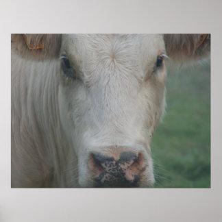 Cabeza grande de la vaca póster