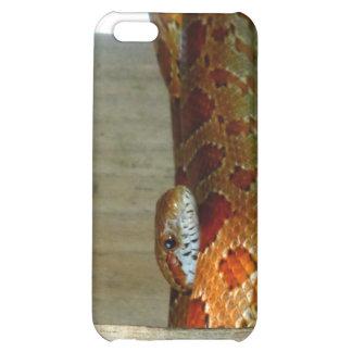cabeza lateral de la serpiente de rata roja