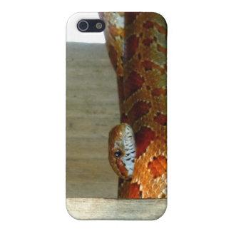 cabeza lateral de la serpiente de rata roja iPhone 5 fundas