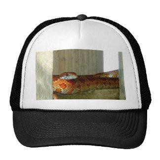 cabeza lateral de la serpiente de rata roja gorro de camionero