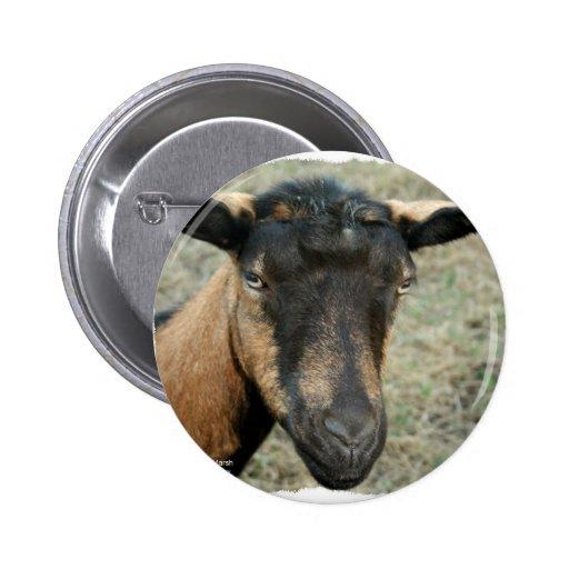 Cabeza marrón de la cabra de Oberhasli tirada en c Pin Redondo 5 Cm