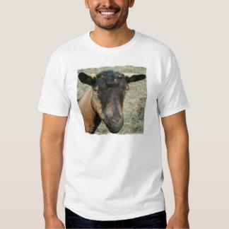 Cabeza marrón de la cabra de Oberhasli tirada en Camisas