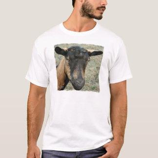 Cabeza marrón de la cabra de Oberhasli tirada en Playera