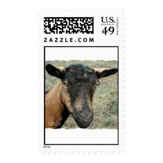 Cabeza marrón de la cabra de Oberhasli tirada en Envio