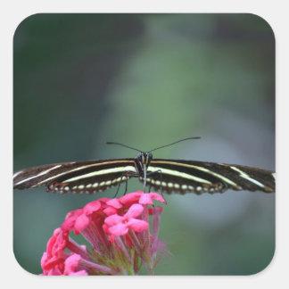 cabeza negra amarilla de la mariposa en las alas calcomania cuadradas