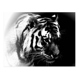 Cabeza negra y salvaje del tigre postal