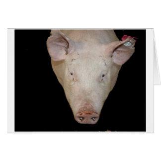 Cabeza rosada del cerdo contra fondo negro felicitación