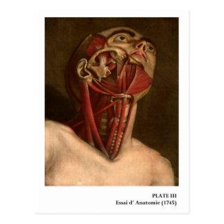 Cabeza y cuello de la anatomía el | del vintage tarjeta postal