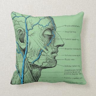 Cabeza y venas - anatomía almohadas