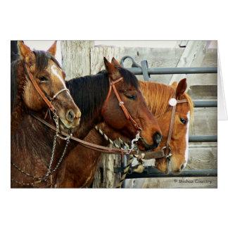 Cabezas de caballo frenadas tarjeta de felicitación