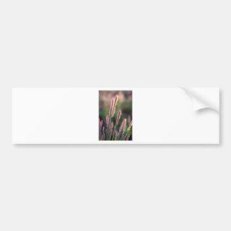 Cabezas de la semilla de la hierba etiqueta de parachoque